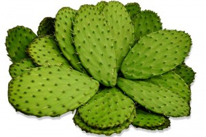 nopal phenq ingredient