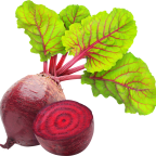 beetroot-png-image_png00231